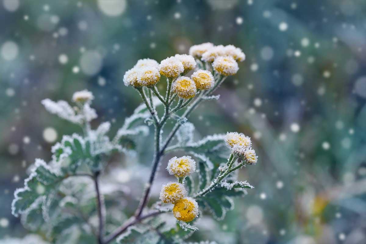 Winter_Blooms